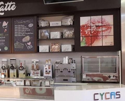 cycas-1920x580
