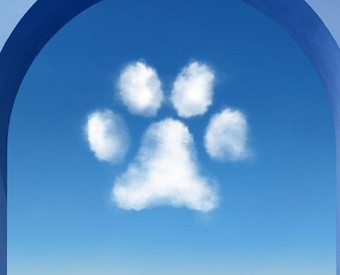 Dogs_access_klp_pictos_arche_proximity_1920x580px_BLUE5
