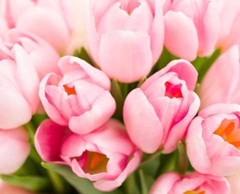 blommor_responsiv_1920_580