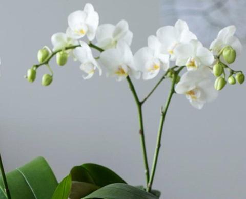 orkideer2_1920x580