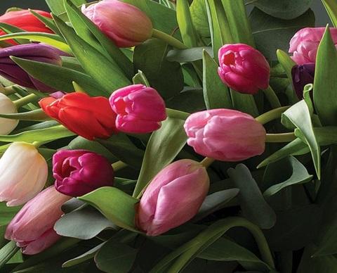 Mestergrnn tulipan