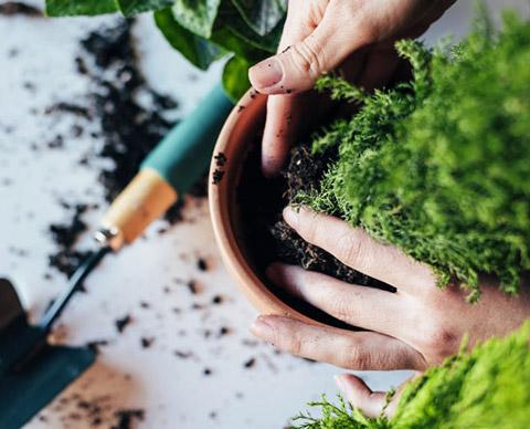Planter om en grønn plante.