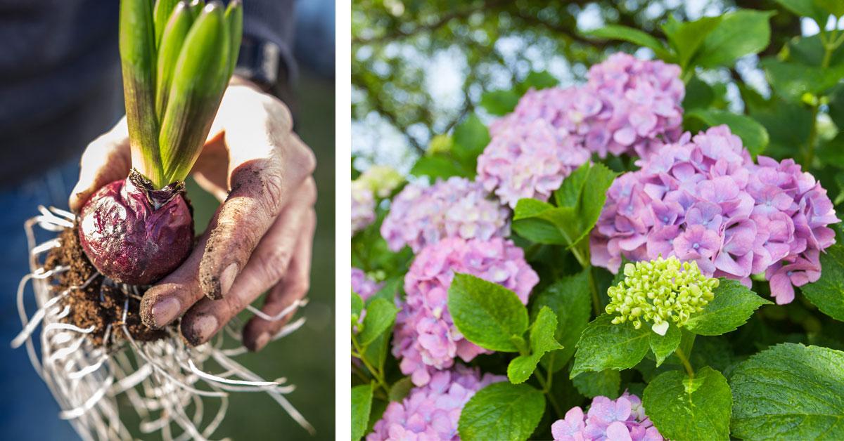 Bildecollage av blomster
